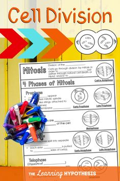 Fun Ways to Teach Mitosis. Middle School and High School Ideas Third Grade Science, Middle School Science, Ap Biology, Cell Biology, Science Classroom, Classroom Ideas, Material Science, School Levels, Science Notebooks