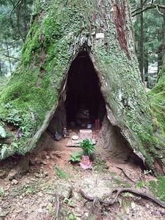 A Japanese Shrine inside of a tree.