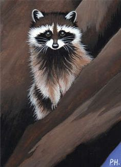 ACEO Print Raccoon Tree | eBay