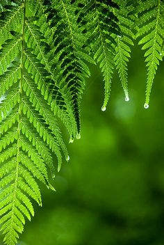 """Fern"" ~ by nickmaslen on Flickr."
