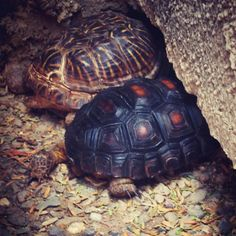 Rocko and smith, turtle and tortoise friends