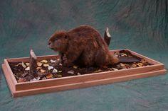 taxidermy habitat ideas | Beaver