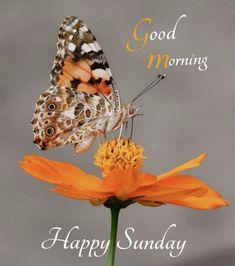Happy Thursday Morning, Good Day, Animals, Butterfly, Buen Dia, Good Morning, Animales, Hapy Day, Animaux