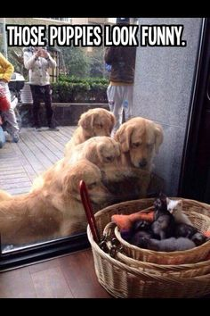 """Those puppies look weird"""