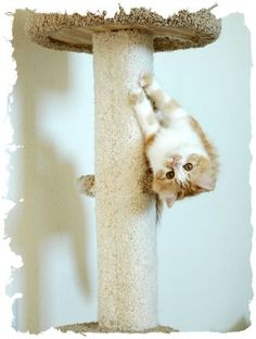 ... cats, tigers especially, are very sensitive to the effects of catnip #cat - Care for cats at Catsincare.com!