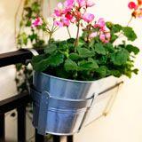 Go to outdoor plant pots & plants