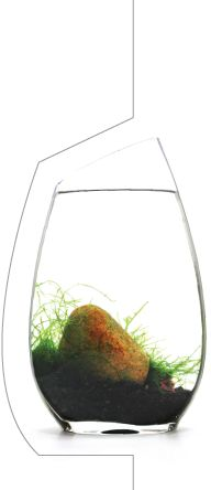 The BLUEiQ is a miniature ecosystem designed to be educational and beautiful.