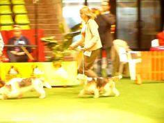 Dog Show - Opole 2009 - www.pbgv.pl - PRET-A`-PORTER Pangea - Pary Hodow...