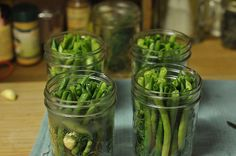 Pickled Green Beans (aka Dilly Beans) 2 pounds green beans, trimmed to fit your jars 2 cups apple cider vinegar 2 cups water 2 tablespoons pickling or fine sea salt 4 teaspoons dill seed 2 teaspoons black peppercorns 1 teaspoon red chili fla Spicy Green Beans, Pickled Green Beans, Easy Summer Meals, Summer Recipes, Canning Vegetables, Veggies, Fresco, Dilly Beans, Long Bean