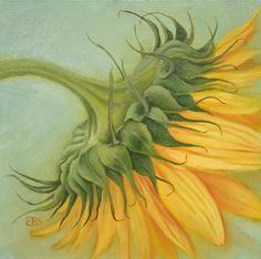 Still Life in Oils, Paintings by Elaine Brady Smith. Still Life in Oils, Daily Paintings Realistic Oil Painting, Cow Painting, Still Life, Classic Cars, Original Paintings, Vintage, Art, Sunflowers, Kunst