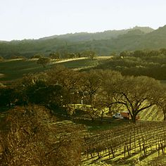 Wine Country Face-Off results | Northern California: Napa vs. Sonoma | Sunset.com