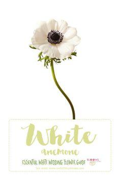 The white anemone! C