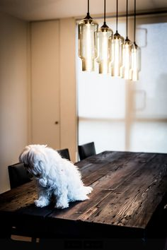 Pharos Modern Pendant Lights in Smoke Decor, Niche Modern, Dining Room Lighting, Dining Room Design, Modern Lighting Design, Modern Pendant Light, House Interior, Contemporary Dining Room, Modern Lighting