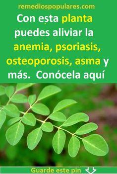 Cabbage Soup, Spirulina, Medicine, Cancer, Herbs, Healthy, Magnolia, Tips, Plants