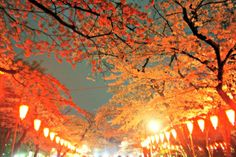 You may already know that cherry blossoms are a big deal in Japan. A really big deal. The sweep a