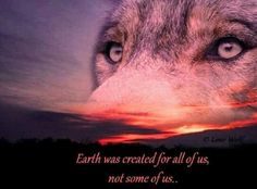 wolf graphics, pictures, images and wolfphotos. Social network, image editing, and free image hosting. Beautiful Wolves, Animals Beautiful, Beautiful Life, Beautiful Things, World Of Warcraft Gold, Les Fables, Animal Spirit Guides, Celtic Music, Forest Mountain