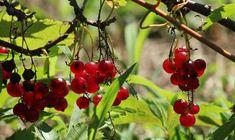 Péče o zahrádku během léta – červen, červenec a srpen Fruit