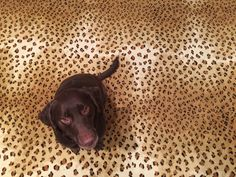 Cheetah Carpet--so cool, even the dog approves!!
