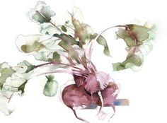 kate osborne Artist Artwork Gallery, Watercolour, animals, chickens, still life Watercolor Fruit, Watercolor Artists, Watercolor Illustration, Watercolor Paintings, Watercolours, Kate Osborne, Building Painting, Sketch Notes, Plant Art