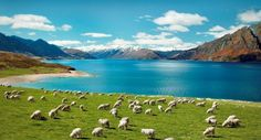 Are you on the lookout for sustainable tourism destinations? Here is a rundown of some of the best eco-tourism destinations for the environmentally conscious travellers. Eco-tourism is all about touri Moving To New Zealand, Visit New Zealand, New Zealand Travel, Places To Travel, Places To See, Travel Destinations, Voyager Seul, New Zealand Landscape, Best Vacations