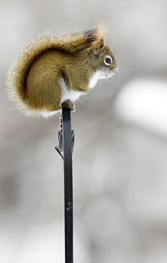 squirrel.. (by eva8* on Flickr)