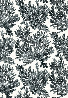 Marine Coral Wallpaper by Thibaut Coastal Wallpaper, Nautical Wallpaper, View Wallpaper, Black Wallpaper, Beautiful Wallpaper, Construction Wallpaper, Tropical Design, Coral