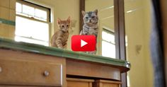 Yes, This Is A Friskies Commercial. But Trust Me, It's Hilarious.