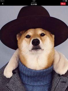 Menswear Dog love it!