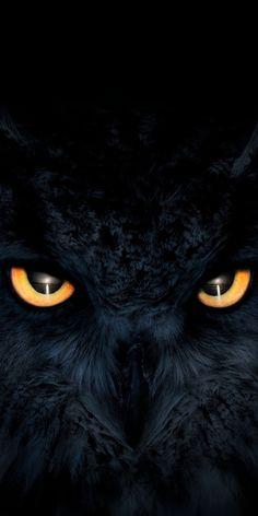 Owl Wallpaper Iphone, Eyes Wallpaper, Dark Wallpaper, Animal Wallpaper, Iphone Wallpapers, Cute Owls Wallpaper, Trendy Wallpaper, Wallpaper Wallpapers, Owl Photos