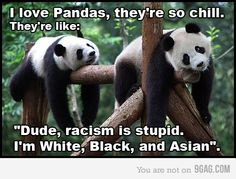 Too Cute. Always have loved pandas.