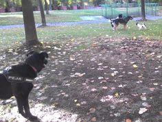 04/10/2015 - Torino con Peja, Iride e Pepito