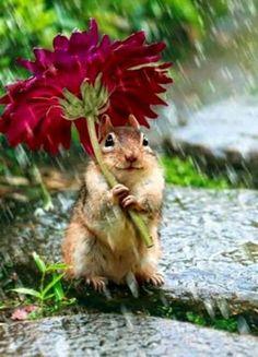 Tegen regen