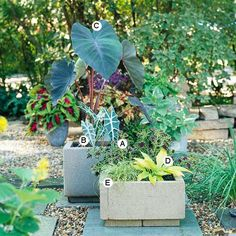 Container gardens for shade.  Use some concrete blocks and put old tiles underneath.