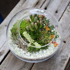 Интересная штука — флорариум. Этот вариант очень практичен и привлекателен, идеально смотрится в интерьере и экстерьере. А также подходит для тех, кто не может себе позволить роскошный большой сад