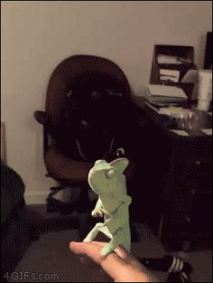Chameleon popping bubbles! | See more fun videos here: http://gwyl.io/