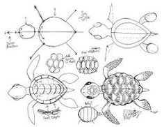 Sea turtle drawings the sea turtle came out to draw these animals i had to research mainly - Dessin de tortue de mer ...