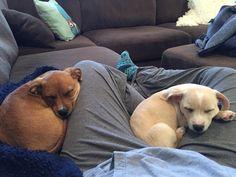 Synchronized Sleeping http://ift.tt/2ngZmTj
