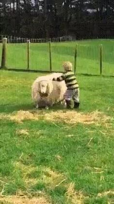 What a ride ! Cute Funny Babies, Cute Funny Animals, Funny Kids, Funny Cute, Funny Animal Videos, Funny Animal Pictures, Best Funny Pictures, Animals And Pets, Baby Animals