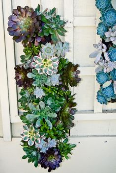 Stunning Succulents | Flickr - Photo Sharing!