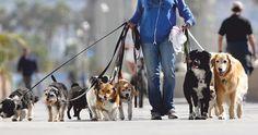 """Pineado de http://www.washdog.com/es/servicios/el-paseador-de-perros.html ¿Cómo se las llama a las personas que realizan esta tarea? Ayuda: verbo """"pasear"""". Ver más en: https://www.flickr.com/photos/spehr/2573380384/in/faves-marcelaspezzapria/"""