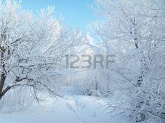 В зимний пейзаж. Изморозь на дерево
