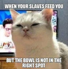 25 Funny Animal Pictures Of The Day - Funny Animal Quotes - - 25 Funny Animal Pictures Of The Day Funny Animals Daily LOL Pics The post 25 Funny Animal Pictures Of The Day appeared first on Gag Dad. Funny Animal Quotes, Cute Funny Animals, Funny Cute, Top Funny, Funniest Animals, Funny Shit, Funny Cat Memes, Meme Meme, Funniest Memes