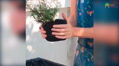 Indoor Vegetable Gardening, Container Gardening, Gardening Supplies, Lush, Greenery, Garden Ideas, Planters, Gardens, Glamour