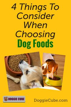 There are several factors to consider when choosing the right food for your dog. Different dogs have different nutritional needs at different stages in their lives. Here are some things to consider when selecting the food you'll give your dog. Dog Nutrition, Dog Diet, Guide Dog, Different Dogs, Medical Problems, Dog Care Tips, Homemade Dog Food, Dog Grooming, No Cook Meals