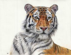 colored pencils drawing
