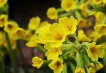 Növénygondozás A-tól Z-ig - Modern Quick Garden, Primroses, Birth Flowers, Save The Bees, Garden Supplies, Plants, February, Gardening, Modern