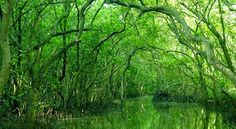 Can Gio Mangrove Forest 9