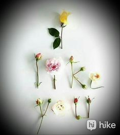 Nature Animals, Love Flowers, Pet Birds, Fragrance, Plants, Gifts, Beautiful, Presents, Plant