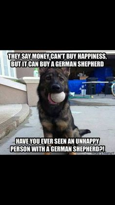 Wicked Training Your German Shepherd Dog Ideas. Mind Blowing Training Your German Shepherd Dog Ideas. Funny Dog Memes, Funny Animal Memes, Funny Animal Pictures, Animal Captions, Dog Humor, Funny Animals, German Shepherd Memes, German Shepard Quotes, Funny German Shepherds