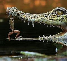 Strong froggie ☺